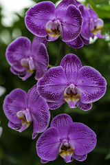 DSC02481 (rgpathi82) Tags: flowerdome singapore
