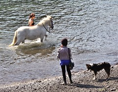 Mullion Cove - May 2018 - Wading in the Water (Gareth1953 All Right Now) Tags: beautiful young woman wading training horse friend dog girl ponytail collie friends together