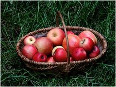 Autumn # 2 (MaxUndFriedel) Tags: nature garden gras basket apple fruit harvest