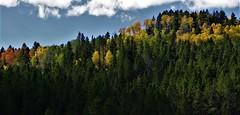 Autumn's Palette (The VIKINGS are Coming!) Tags: autumn fall color foliage aspens cottonwood willow spruce pine fir mountains rockies teton jacksonhole