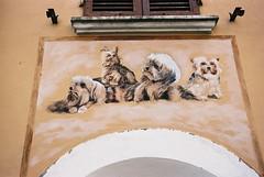 Doggies (goodfella2459) Tags: nikonf4 afnikkor50mmf14dlens kodakektar100 35mm c41 film analog colour rimini italy mural doggies borgosangiuliano art streetart manilovefilm