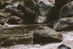 Río Los Sosa, Tucumán. (LeoMoyano) Tags: bird nikon d600 sigma 28200 stones river creek nature animal wild