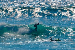 IMG_6942 (palbritton) Tags: surf surfing surfer singlefin longboard longboardsurfing surfcontest