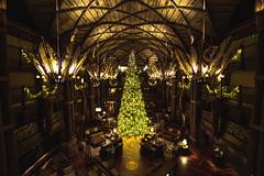 Big Tree (3rd-Rate Photography) Tags: christmas christmastree disney animalkingdomlodge resort vacation architecture building canon wideangle 1635mm orlando florida 3rdratephotography earlware 365