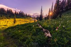 Mt. Rainier as seen near Tipsoo Lake (MagicPixls) Tags: milkyway mtrainier tipsoolake wildflowers