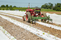 20180607acp130sp050.jpg (ukagriculture) Tags: horticulture weedcontrol cultivator weeds cultivation weed lexington kentucky