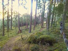 Kråkåsen øst_20170422_185435Edit (mtbboy1993) Tags: rawtherapee kråkåsen askim indreøstfold østfold forest skog singletrack enkeltsporsti norge norway moss mose