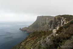20181014-11-Three Capes Track day 3 - Looking back along sea cliffs (Roger T Wong) Tags: 2018 australia capepillar np nationalpark rogertwong sel24105g sony24105 sonya7iii sonyalpha7iii sonyfe24105mmf4goss sonyilce7m3 tasmannationalpark tasmanpeninsula tasmania threecapestrack bushwalk cliff cloud dolerite fog grey hike mist outdoors sea tramp trek walk