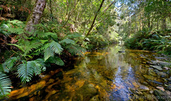 Jubilee Creek (Panorama Paul) Tags: paulbruinsphotography wwwpaulbruinscoza southafrica southerncape gardenroute knysnaforest jubileecreek indigenousforests goldrush nikond800 nikkorlenses nikfilters