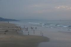 JLF16372 (jlfaurie) Tags: deauville normandie normandy france francia dqaniel mariefrance louisette mechas mpmdf jlfr jlfaurie pentax k5ii plage playa beach seaside mer mar sea