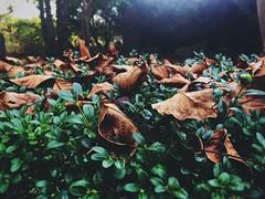 Jesienne liście (basiamarcisz) Tags: mazovian mazowsze nature natura przyroda leaves liście autumn jesień
