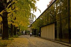 Reflections (manposanpo) Tags: reflections ginkgo 銀杏 university tokyo 東京大学 autumn colors golden window japan theuniversityoftokyo 1803000mm yellow trees manposanpo