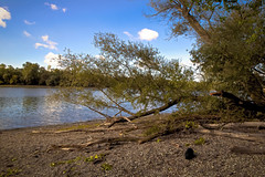 Urwald am Rhein (tucsontec) Tags: urwald wald wasser rhein germany deutschland nature natur naturschutzgebiet weide ufer steine holz canon cloudscape clouds wolken landschaft landscape river fluss