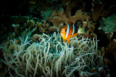 IMG_7056 (Gil Xavier) Tags: underwater scuba philippines canon fantasea g7xmk2 cebu moalbal turtlebay