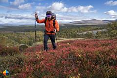 Bilberry fields forever! (HendrikMorkel) Tags: sweden vålådalen åre gregoryoptic48 lightweightbackpack backpacking backpack gregory optic48backpack