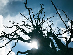 Nightmares (Peaf79) Tags: tree fear nightmare shadow branches knightshayes tiverton devon