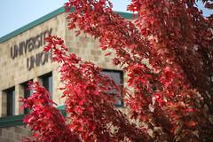 Green Bay Fall Colors-13