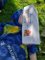 Sleeping in the berry box (quinn.anya) Tags: paul toddler box berries sleeping eatrealfoodfestival foodfest hiding