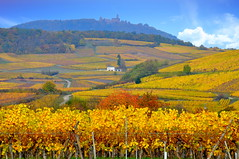 Bergheim (Haut-Rhin, F) (pietro68bleu) Tags: alsace vignoble couleursautomnales