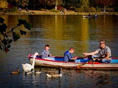 Bois de Vincennes en octobre (Calinore) Tags: lacdaumesnil daumesnilslake boat bateau barque birds oiseau cygne svan