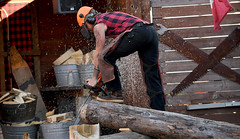 Sawing Logs (Anthony Mark Images) Tags: people portrait male lumberjack canadianlumberjack canadianplaidshirt safety boots legprotectors dickiejeans stihlchainsaw cuttinglog sawdust tattoos orangehardhat visor earprotection action competition race greatlumberjackshow ketchikan alaska usa 49thstate nikon d850