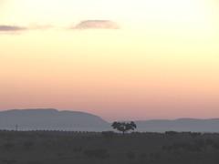 early morning on the road to estremoz (lualba) Tags: tree baum landschaft himmel wolken sky clouds alentejo portugal sonnenaufgang sunrise