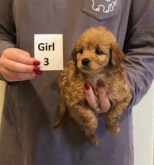 Kizzie Girl 3 pic 3 12-9