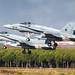 Spanish Hornets