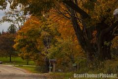 IMG_7590_result (ferrariartist) Tags: delorean gullwing automobiles automotive automobile 80s stainless car sportscar irish fall autumn ferrariartist