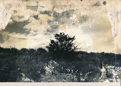00000000_IMG_0007 (NAMARA EXPRESS) Tags: exhibition photostreet photoexhibition photograph print paper memorial old typhoons storm surge monochrome blackandwhite japan film trix plusx canon canoscan 9000f scanner scan namaraexp