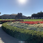 Flowers in park at the Oval at Stanford University in Palo Alto, Silicon Valley, California thumbnail