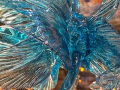 cristal (susocl1960) Tags: macrofotografía azul macrofriday blue closeup
