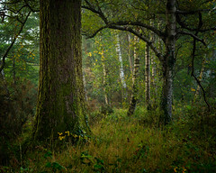 the elders (akh1981) Tags: amateurphotography autumn beautiful travel trees tranquil tree benro tamron green nikon nisi nature nationalpark nisifilters nationalheritage nationaltrust nationalheritagesite morning outdoors walking