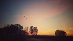 Laguna de Lor (Marina Is) Tags: laguna lor navarra ablitas sunset sky cielo pajaros birds sliderssunday hss