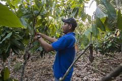 Harvin Rivera, productor observador (Proyecto Adapta) Tags: proyectoadapta cambioclimático cacao jinotega ingemann centro humboldt nicaragua christian aid