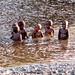 Children in the river