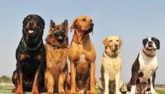 10 Best Dog Foods (katalaynet) Tags: follow happy me fun photooftheday beautiful love friends