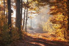 Autumn in the forest 2 (xkolba) Tags: tree misty scenery autumn foggy mist forest morning trees fog outdoor landscape podlasie poland wood sunrise