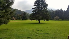 Arvanitsa (Viotia GR) 1.000m (spicros78) Tags: landscape trees nature 2018fall mobile greece arvanitsa viotia 1000m walking