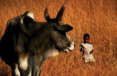 Madagascar Isalo - L'enfant et le Zébu (regis.grosclaude) Tags: madagascar mascareignes ile afrique africa malgache champ orange zebu animal enfant child children elevage troupeau herbe regard portrait couleur madagaskar savane berger élevage