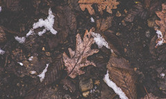 Autumnal winter (Pan.Ioan) Tags: leaves winter cold snow wet nature outdoors