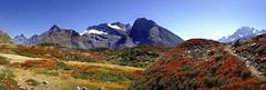 La vie en rouge (art & mountains) Tags: alpi alps vallese cime creste punte quattromila ghiacciaio fall piante viraggio red sentiero path hiking natura silenzio contemplazione spazio cielo ambiente vision dream spirit