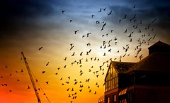 The Birds (Missy Jussy) Tags: building house york birds thebirds sky surrealedit clouds pigeons wildlife crane light city canon canon5dmarkll 5d canon5d canoneos5dmarkii 70200mm ef70200mmf4lusm ef70200mm canon70200mm outdoor outside silhouette