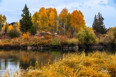 Riparian Color (TierraCosmos) Tags: deschutesrivertrail deschutesriver bend fallcolor fallfoliage autumn river trees landscape aspens oregon centraloregon