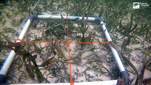 Monitoring Lamun Kobar P2_01