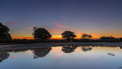 Dawn Pond (nicklucas2) Tags: landscape newforest mogshade pond reflection water tree cloud