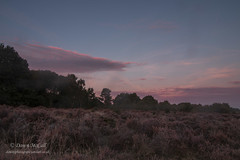 25th September 2018_ Budby Sunrise_ RSPB Budby South Forest_ 03_ Watermaked (dawnmccall.tiger) Tags: landscapes sunrise september heathland lowlandheath nottinghamshire rspbbudbysouthforest 2018