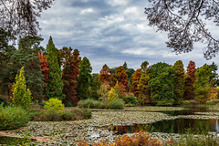 Bedgebury Pinetum--19 (RevCheck Photography) Tags: tree trees pine autumn fall season colour red orange yellow green nature wild outside outdoors explore exploring natural beauty stunning landscape sky clouds river lake water scenery canon eos 6d ef24105mm f4l is usm