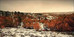 Winters short visit... (TrondSphoto) Tags: september autumncolors fall first snow dørålen rondanenationalpark norway trondsphoto