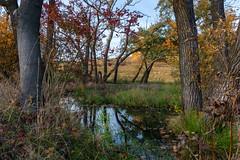 Autumn climates (Tomasz Wyzlic) Tags: poland polska jedlinazdroj dolnyslask landscape landscapephotography landscapephotographer amateurphotography amateurphotographer nikon d7100 forest autumn trees